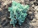ciekawe rośliny_5