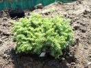 ciekawe rośliny_9