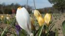 Wiosna w ogrodzie_12