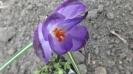 Wiosna w ogrodzie_13