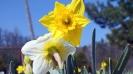 Wiosna w ogrodzie_14