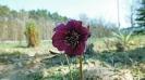 Wiosna w ogrodzie_17