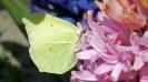 Wiosna w ogrodzie_20