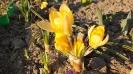 Wiosna w ogrodzie_2