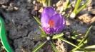 Wiosna w ogrodzie_4