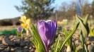 Wiosna w ogrodzie_5
