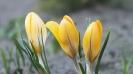 Wiosna w ogrodzie_8