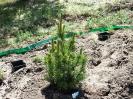 ciekawe rośliny_10