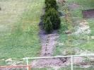 Widok ogrodu