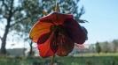 Wiosna w ogrodzie_18