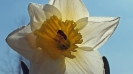 Wiosna w ogrodzie_21