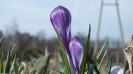 Wiosna w ogrodzie_9